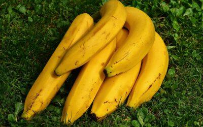 ¿A qué se debe la forma de los plátanos?